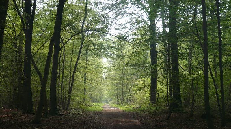 Forêt de Saint-Germain-en-Laye